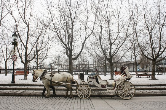 a horse-drawn carriage waiting in front of a snowy park in Old Montreal, Quebec