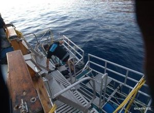 Guadalupe Island Mexico Shark Cage Diving