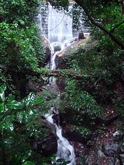Tijuca Park in Rio de Janeiro Brazil